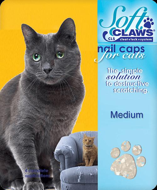 medium-cat