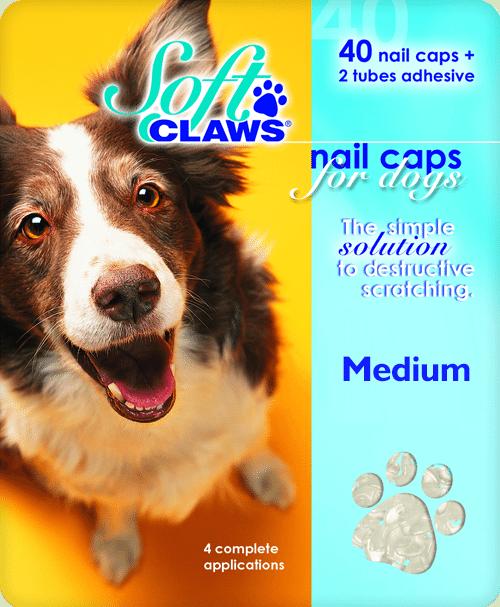 medium-dog