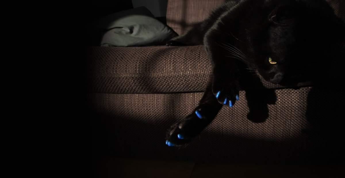 cat-paws-slider