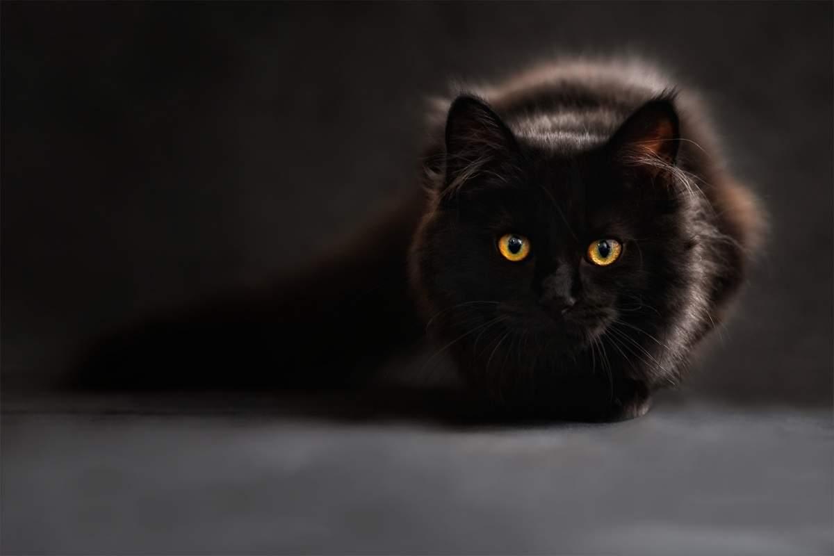 cat-slider