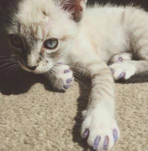 glitter-claws