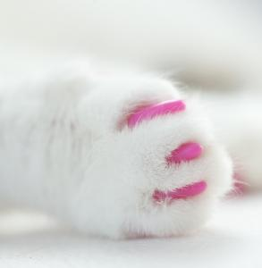 pink-claws